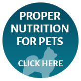 Proper Nutrition for Pets